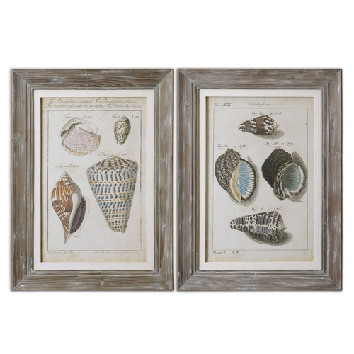 Uttermost Lighting Uttermost Vintage Shell Study Framed Art, Set of 2 41532