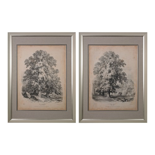Sterling Lighting The Elm And The Sycamore - Fine Art Giclee Under Glass 151-011/S2