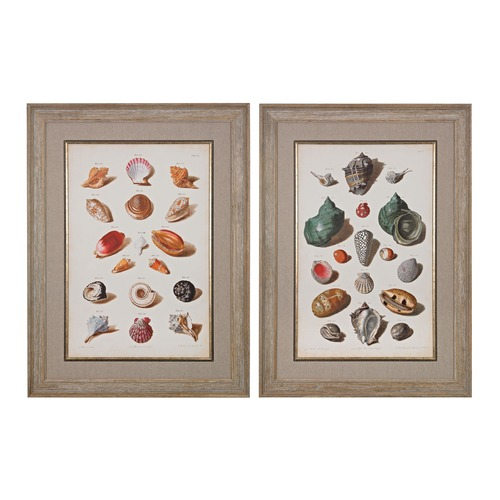 Sterling Lighting Muller Shells V, VI - Fine Art Giclee Under Glass 151-020/S2