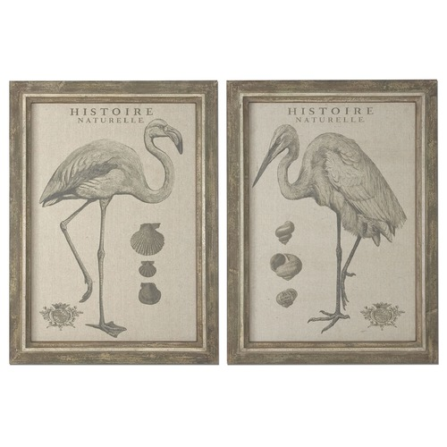 Uttermost Lighting Uttermost Natural History Framed Art, Set of 2 51077