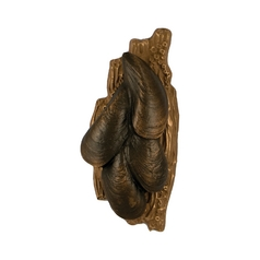 Mussels Door Knocker in Brass Finish